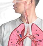 Titelbild des Albums: Thema Gesundheit im Soleum und Dampfkabine